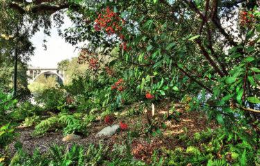 Arroyo Edge Gardens