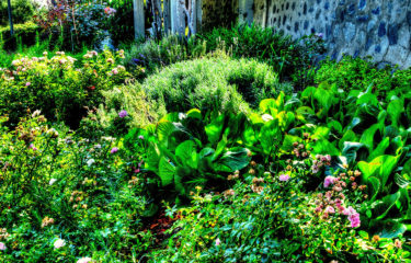 The Dooryard Garden