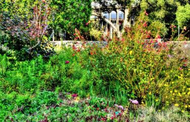 The Dooryard Garden